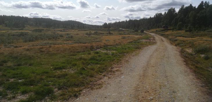 Den lange veien tilbake
